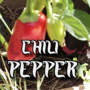 "Andy Warpigs -- ""Chili Pepper"" (Video Premiere)"