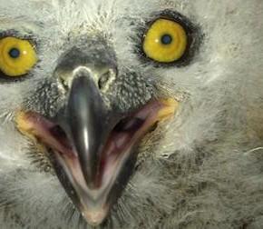 That Time I Found An Owl Walking Around Phoenix
