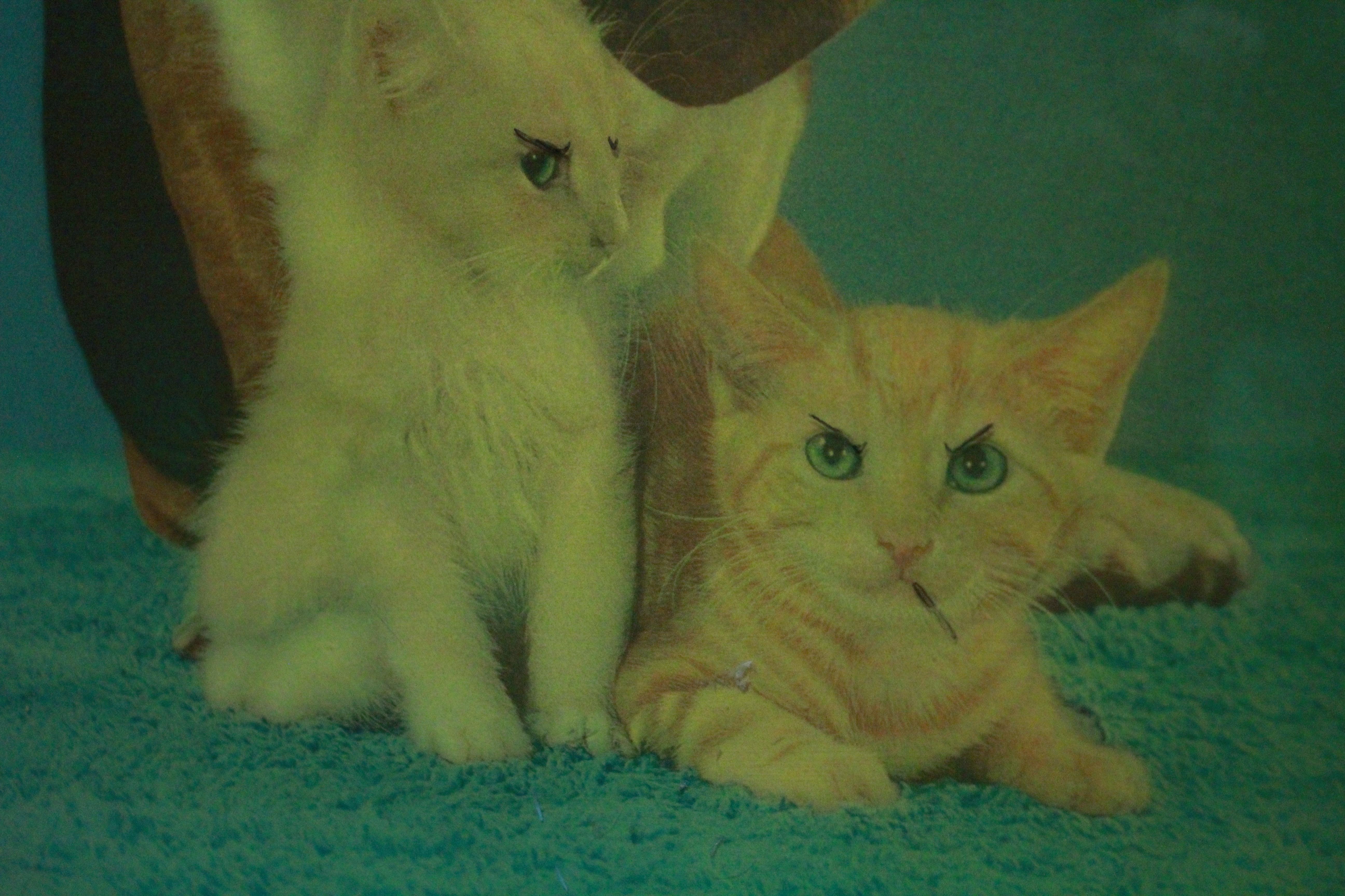 kittens IMG_0692